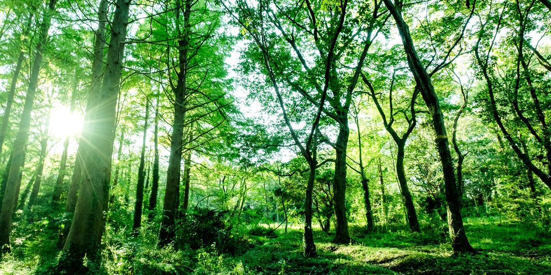 自然豊かな森林